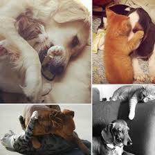 cats and dogs playing. Wonderful And Cute Pictures Of Cats And Dogs Playing Together For And N
