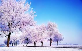 winter background images hd. Wonderful Winter Wide  On Winter Background Images Hd Wallpapers