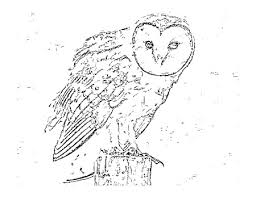Small Picture Little Critters Corner Free Coloring Page Barn Owl AWARE
