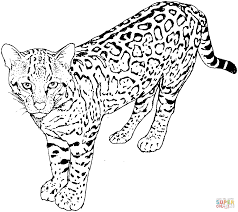 Leopard Coloring Pages For Kids And For Adults Coloring Home
