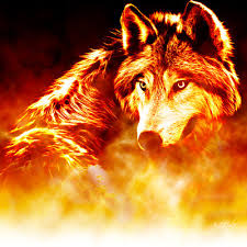 Image result for small wolf pictures