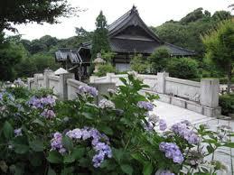 「阿弥陀寺アジサイ祭り」の画像検索結果