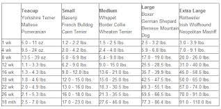 Airedale Weight Chart Dog Growth Months And Weight To Large Breed Dog