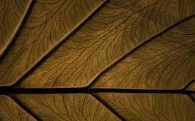 Brown Background Hd Wallpaper - High ...