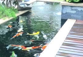above ground pond ideas design interior goldfish pounder rc reviews stunning small ponds and water frog