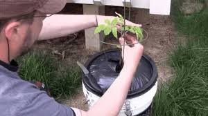grow vegetables with this and easy to make diy self watering planter