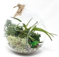 trex air plant terrarium kit
