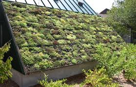 green roof construction how to make a