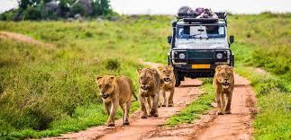How COVID-19 Impacting Luxury Safari Tourism Market Globally?