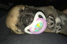 Image result for puppy