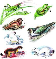 Приспособление животных к среде обитания Адаптация это что  Приспособление животных к среде обитания Адаптация