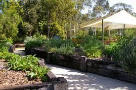 medicinal plant garden southern cross university medicinal plant garden