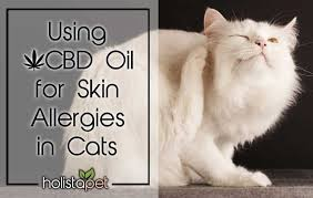 Using Cbd Oil For Skin Allergies In Cats Works Holistapet
