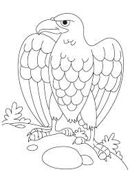 Small Picture Bald eagle coloring page Download Free Bald eagle coloring page
