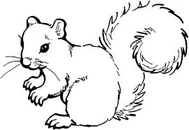 Small Picture Squirrel Coloring Pages GetColoringPagescom