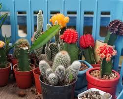 Container Cactus Garden