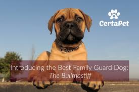 Bullmastiff Height And Weight Chart Introducing The Best Family Guard Dog The Bullmastiff