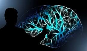 Descifrando el código Enigma del cerebro - OpenMind