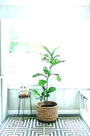 large indoor tree pots indoor tree pots tall indoor plant pots large indoor plant pots cool