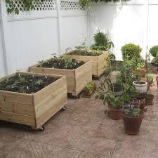 growing vegetables in urban planters