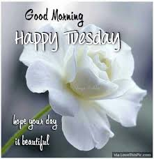 Beautiful Tuesday Quotes Best of Good Morning Happy Tuesday Hope Your Day Is Beautiful Pictures