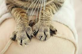 How To Dissuade Your Cat From Scratching Cat S Best