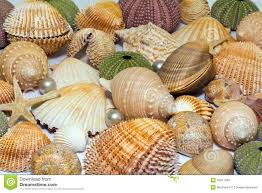 sea shells collection collection of various colorful seashells on white background stock