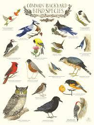 British Garden Birds Chart