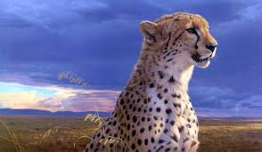 226 cheetah wallpapers cheetah backgrounds page 5