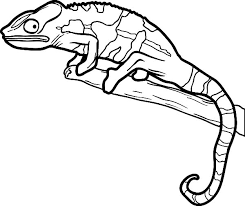 Small Picture Lizard Mating Coloring Pages Lizard Mating Coloring Pages Color