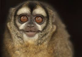 arguments against animal testing cruelty international owl monkey