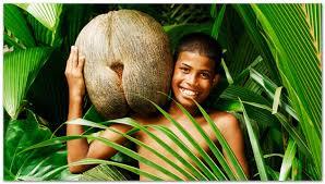 Coco de Mèr Praslin