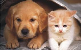 dogs and cats wallpaper. Plain Wallpaper Teddybear64 Images Dog And Cat Wallpaper HD Wallpaper Background Photos With Dogs And Cats R