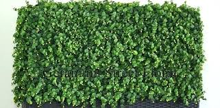 artificial plant mat sample faux wall decor boxwood mats make exciting new covering