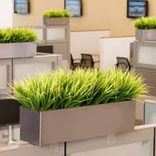 plants for office cubicle. Office Cubicle Decor Plants Ideas For Decorating Your L