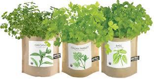 garden in a bag. Garden In A Bag - Set Of Basil, Oregano, And Parsley
