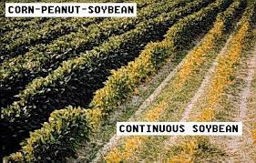 Soybean Cyst Nematode Nc State Extension Publications
