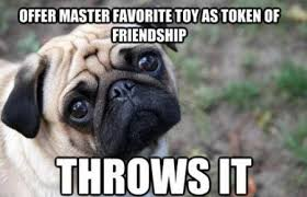 dejected pug | Funny | Pinterest | Pugs, Haha and Dog Toys via Relatably.com