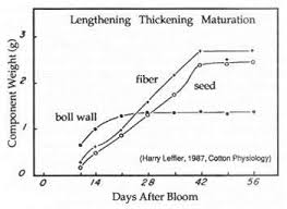 Cotton Growth Stage Chart Advancing Cotton Educationgrowth And Development Of A Cotton