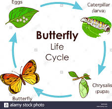 Life Cycle Cut Out Stock Images Pictures Alamy