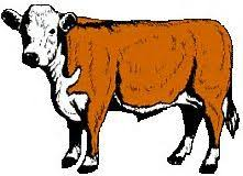 beef cow outline. Perfect Outline Image Result For Beef Cow Outline Clip Art And