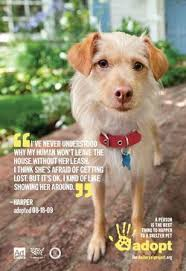humane society ads.  Ads One Of The New Shelter Pet Project Print Ads Intended Humane Society Ads