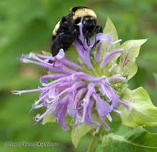 average american flower size butterfly plants list butterfly flowers and host plant ideas