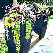 ideas for potted plants patio patio planting ideas planter large outdoor pots and planters beautiful with