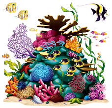 Image result for coral reef png