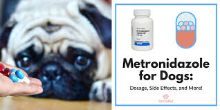 Metronidazole For Dogs Dosage Side Effects And More