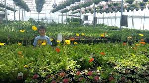 garden centers lexington ky greenhouses nursery center and gift in