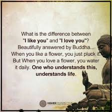 Love Quotes By Lord Buddha Hover Me Adorable Buddha Quote On Life