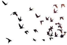 birds flying in the sky silhouette. Interesting Birds Birds Flying In The Sky Silhouette  Photo16 Inside Flying In The Sky Silhouette T