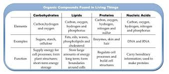 Compare The Chemical Composition Of Carbohydrates Lipids